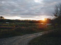 Manorun Organic Farm - Home Organic Farming, Hamilton, New Homes, Country Roads, Farmhouse, Explore, Organic Gardening, Cottage, Plantation Homes