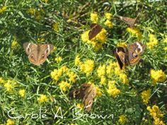 5 Steps to The Ultimate Butterfly Garden