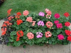 Droždie pre rastlinky Rozdrobte 1 kocku droždia v 1 litri vody a nechajte 2 týždne kvasiť. Potom roztok zrieďte v pomere 1 : 3 vodou a zalejte kvety. Fialky, fikusy či muškáty budú krásne kvitnúť.