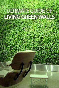 Ever thought of a green wall? Learn all about them .