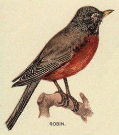Vintage Bird Graphic - Robin - The Graphics Fairy