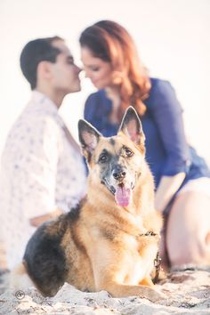 Las Olas Beach engagement session in Ft. Lauderdale by Orth Photography.  Couples photos, engagement photos. Cute shot with dogs.
