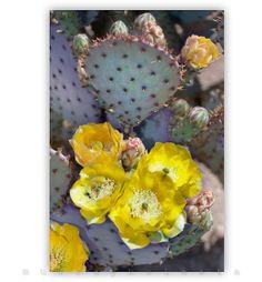 Prickly Pear Cactus Flower Southwest Nature Art by MurrayBolesta, $62.00