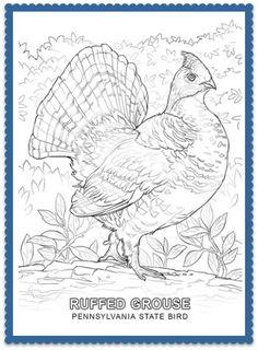 Pennsylvania State Bird. Printable CraftsFree PrintablesColoring  PagesColoring BooksDoodle ArtGrouseNature AnimalsWood BurningPennsylvania