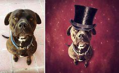 surreal-photography-shelter-dogs-sarolta-ban-7