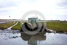 Image of fields - 81136155 Rice Paddy, Agriculture, Cage, Tractors, Fields, Spain, Wheels, Metal, Sevilla Spain