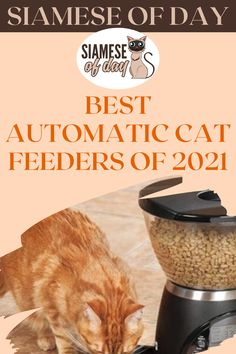 Although a cat is a low-maintenance pet, you must still ensure that it receives the proper nutrition daily. Working a full-time job or traveling for business can cause your cat's food pattern to be disrupted. #siamese #siameseofday #cats #pets #kittens #Blog #cattips #cathealth #kitten #justcats Siamese Cats, Kittens, Low Maintenance Pets, Automatic Cat Feeder, Kitten Care, Food Patterns, Pet Feeder, Food Trays, Proper Nutrition