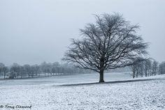 Cold Tree by TonyClem.deviantart.com on @deviantART