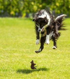 24 Perfectly Timed Photos Of Dogs That Will Have You Rolling - InspireMore