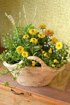 初夏の陽を優しく迎え入れる寄せ植えになりました。イエローとブルーの花色を楽しん頂けると嬉しいです。