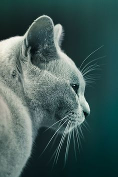 Cute Kitten |cuba Gallery| - Click for More...