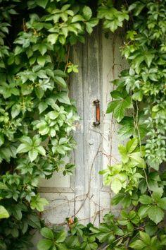 • Cottage on Ivy Lane •