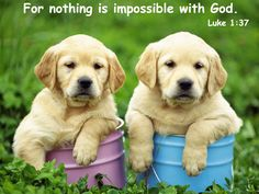 Animals-widescreen-wallpaper-animal.jpg Photo:  This Photo was uploaded by Bible_quoted_pics. Find other Animals-widescreen-wallpaper-animal.jpg pictures...