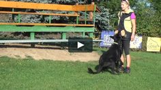 "This is ""Obedience - august 2016"" by  on Vimeo, the home for high quality videos…"
