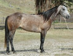 QH Mares For Sale - Sliding On Top Performance Horses