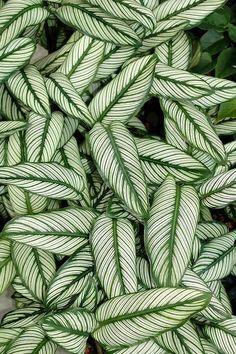 Utiliza el dibujo de las hojas de las plantas para añadirlas a tu decoración @Utrillanais