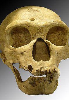 """""""Los neandertales no eran unos superchimpancés""""  Cráneo de neandertal."""