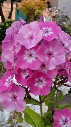 68 Mejores Imágenes De Hermosas Flores En 2019 Awesome Black
