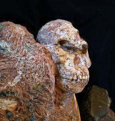 Little Foot - Australopithecus