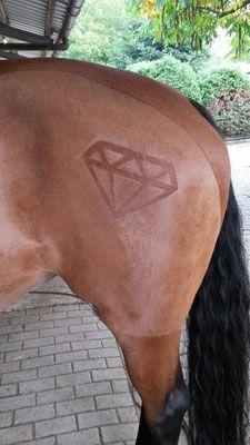 Pin Von Miranda Gatz Auf Horse Patterns Pferd Scheren Pferdeliebe Pferd Und Reiter