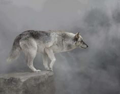 "* * WOLF: "" When I look closely at de mist; I seez spirit faces in it. That's because wolves are spirit creatures."""