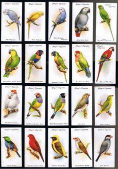 AVIARY & CAGE BIRDS