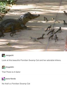Floridian swamp cat