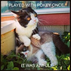 Grumpy Cat vs. Pokey #GrumpyCat #meme For more Grumpy Cat and Pokey quote, humor and meme visit www.pinterest.com/erikakaisersot