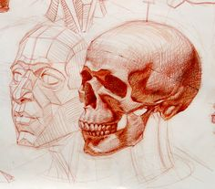 Human skull and the planes of the face. Cross-hatching drawing by Ramon Hurtado