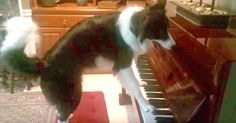 Need Some Entertainment? Check Out This Dog Serenading Her Human! | The Animal Rescue Site Blog