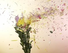 A new way of photographing flowers