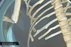 Wip n.65 / Quelle gabbie che proteggono... https://www.facebook.com/giovannilongo.art / fragile skeletons arte art scultura sculpture wood driftwood
