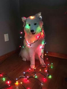 First Christmas dog Cute Dogs And Puppies, Baby Dogs, I Love Dogs, Doggies, Cute Little Animals, Cute Funny Animals, Funny Dogs, Beautiful Dogs, Animals Beautiful