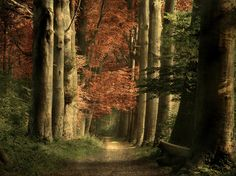 Wonders of Nature: Enchanted Pathways Photo by Gary McParland