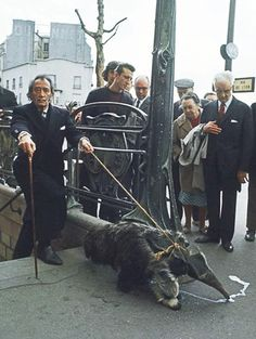 Salvador Dali walking his pet anteater