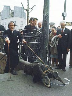 Salvador Dali walking his pet anteater