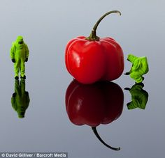 Little men in hazardous materials suits observe a giant chilli pepper in  WARNING - Scotch...