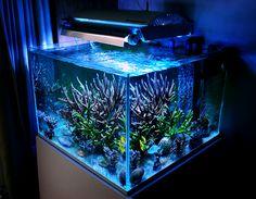 Modern Aquarium design for reef aquaria and freshwater