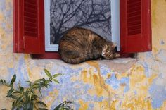 Athens Photos at Frommer's - Plaka cat in the window, Athens----I'm sooo adorable.