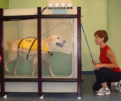 Hydrotherapy for dogs    Therapet: Services Animal Physical Therapy