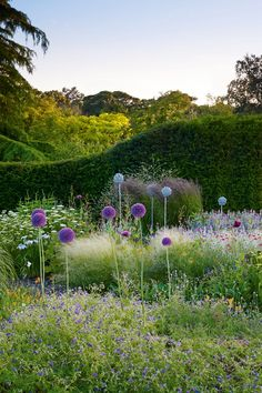 Bluebell Cottage Gardens, Cheshire - Best Nurseries (houseandgarden.co.uk)