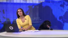 Dog Bursts Onto Live Broadcast, Refuses To Leave News Anchor Alone In Hilarious Video. - InspireMore