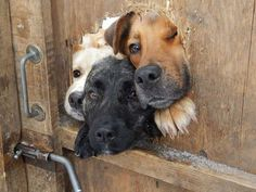 19 Dogs Who Stuck Their Heads Out Of Fences Just To Say Hi