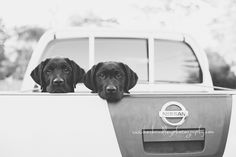 Frasier and Niles – Melbourne dog photographer Dog Photography, Cuddling, Nissan, Melbourne, Labrador, Kitty, Puppies, Cats, Animals