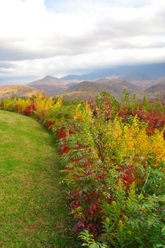 autumn in the smoky mountains pinterest | Fall in the Smoky Mountains. #Smoky #Mountains #Hiking #Cades #Cove # ...
