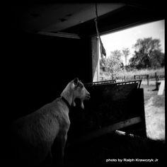 C. Arvanitis Photography: Κάθε αρχή και δύσκολη.