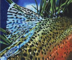 """Sapphire"" Colored pencil drawing of a Rainbow Trout by Travis J. Sylvester. Reference photo courtesy of Bryan Huskey."