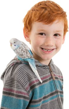 Top Tips for Bonding with Your Pet Bird - Bird | Pet Care Corner by PetSolutions - PetSolutions Blog