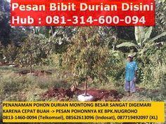 alamat jual bibit durian bawor, di desa alasmalang kemranjen banyumas jawa tengah , hubungi bapak nugroho 081314600094