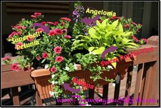 suggetions and ideas for a Full Sun Deck or Window Box - easy to find options and design!/ Running in a Skirt Flowers suggetions and ideas for a Full Sun Deck or Window Box - easy to find options and design!/ Running in a Skirt Full Sun Planters, Full Sun Container Plants, Container Flowers, Flower Planters, Container Gardening, Plants For Full Sun, Balcony Planters, Gardening Vegetables, Gardening Tips